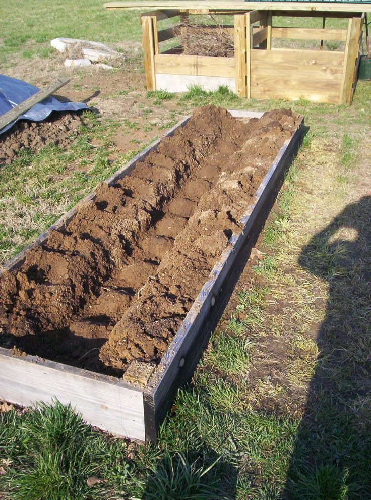 "Asparagus raised bed, 3x12' long bed planted 12"" apart"