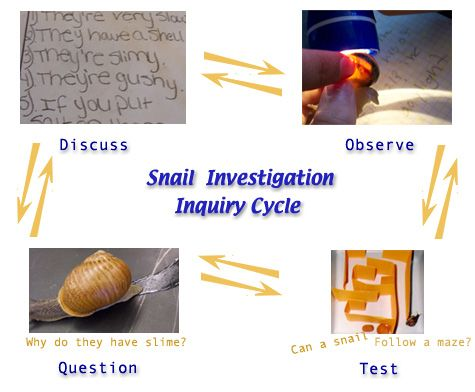 27 Best Images About Snail Inquiry