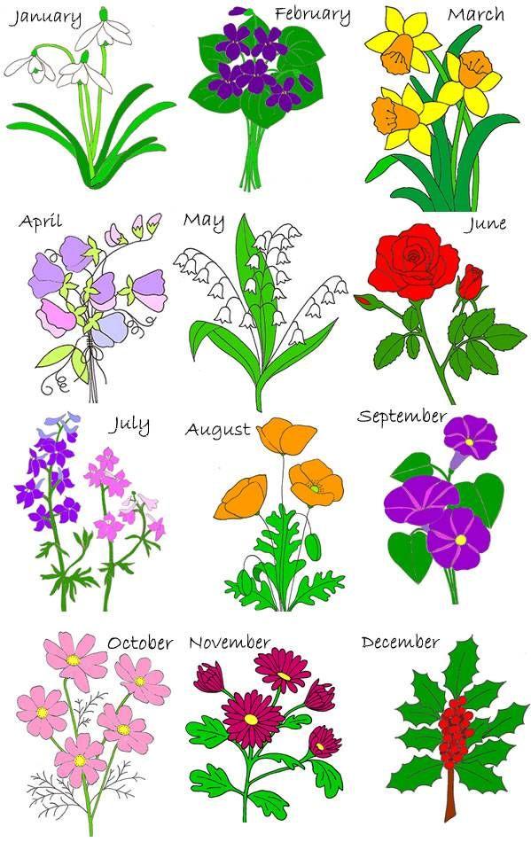 birth flowers Birth stones, flowers Pinterest Birth