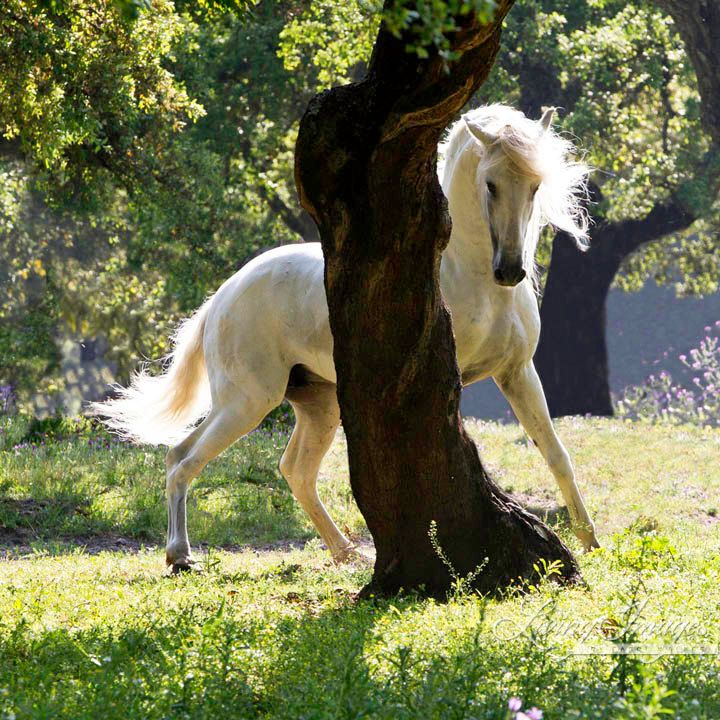 The Stallion and the Tree – Living Images by Carol Walker