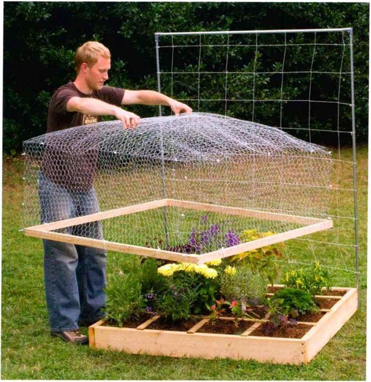 chicken wire cover Planters & Landscaping Pinterest
