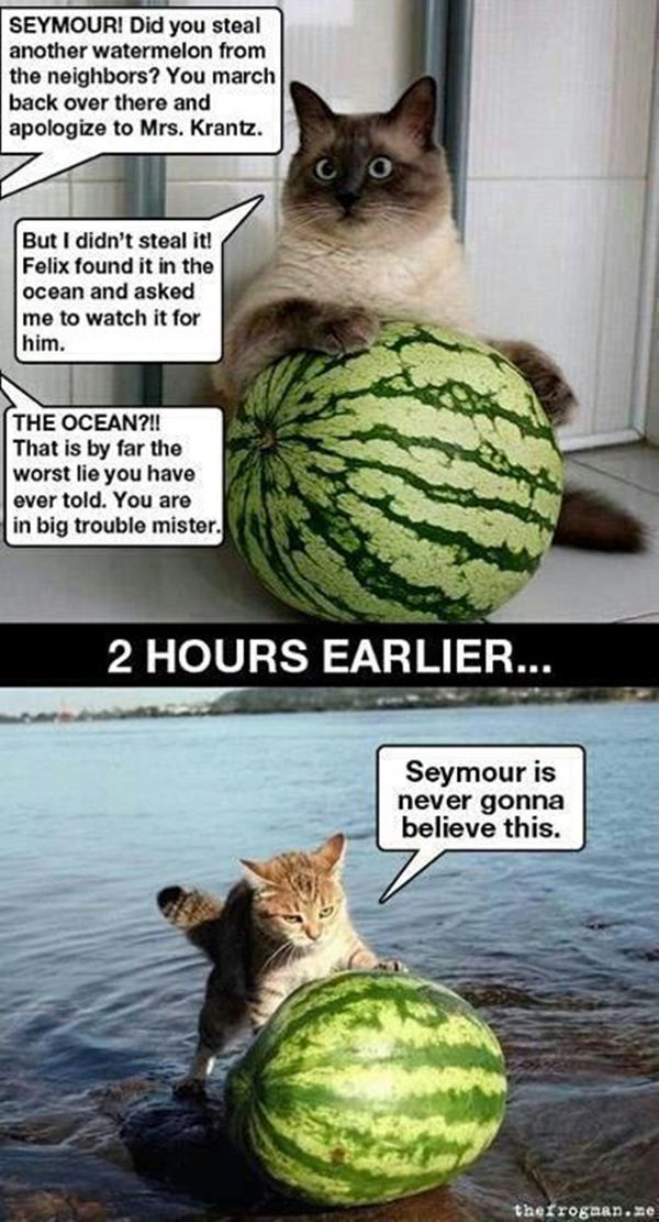 30 Funny animal captions part 9, funny animal memes