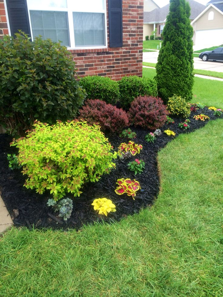 Beautiful flowerbed! Black Mulch made a big difference