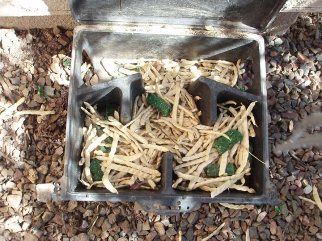 How to get rid of pack rats in saddlebrooke 070912 from