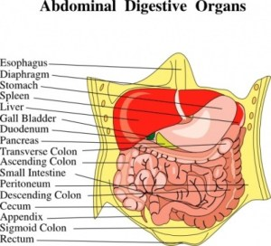 17 Best images about Referred PainAbdominal Quadrants on