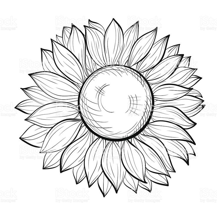 beautiful black and white sunflower isolated on white