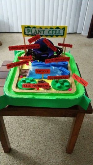 3D Plant Cell project by Bianca ARivas 6th grade | science | Pinterest | Plants, Projects and