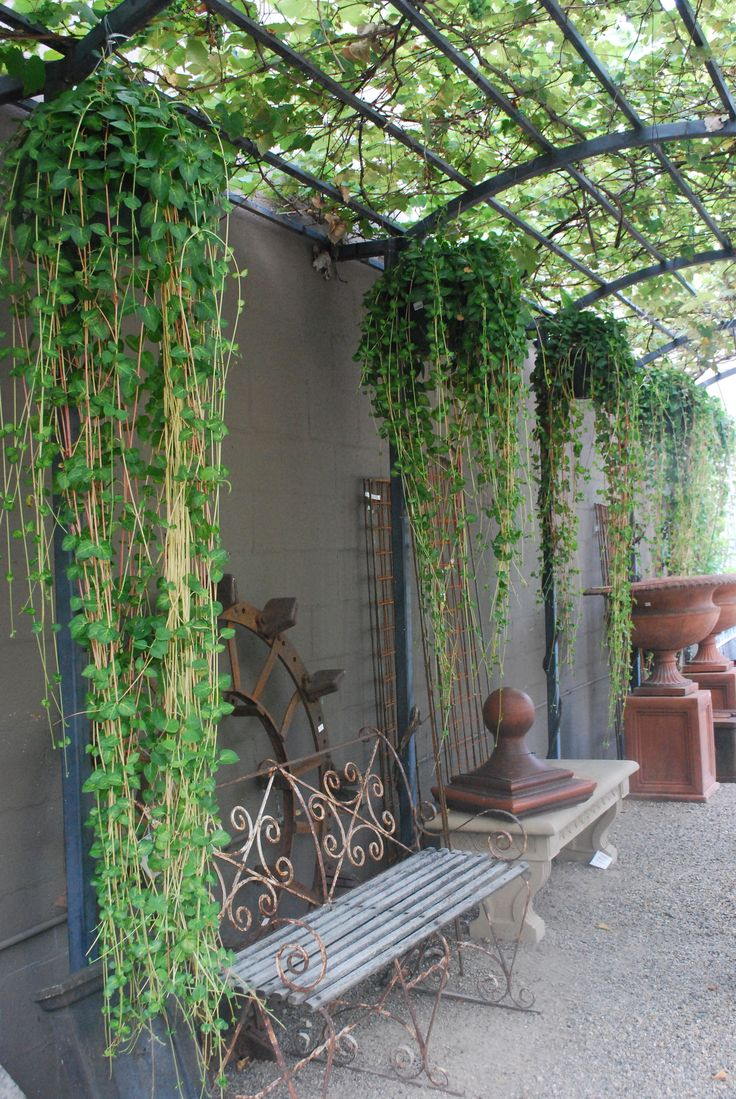 Great use of vertical space and appropriate plants Hot