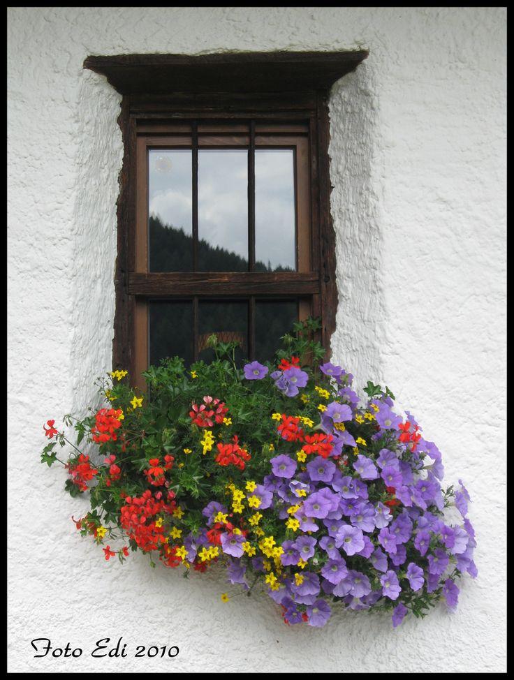 Planter nice color combination Garden Ideas