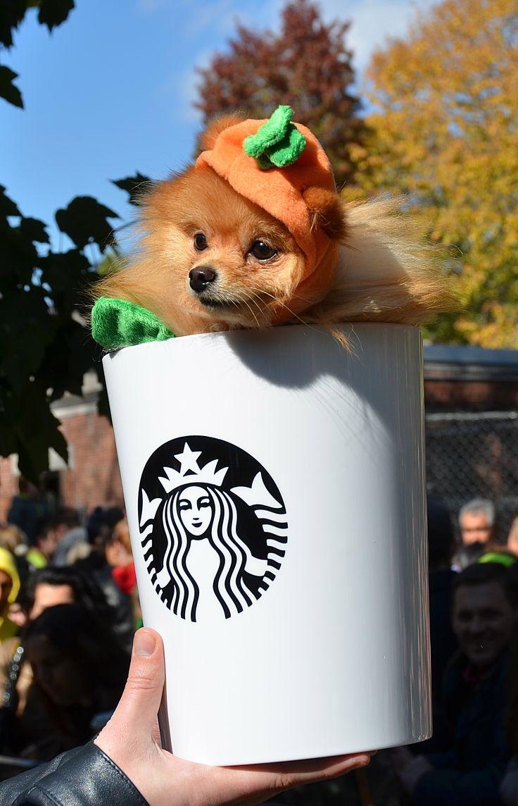Pumpkin Spice Latte pomeranian Cute Pet Costumes
