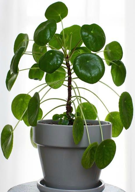 5 Houseplants That Will Bring You Good Luck Rl