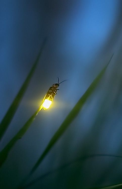 Seeing fireflies… I once lived on the edge of a forest, in which there were HUND