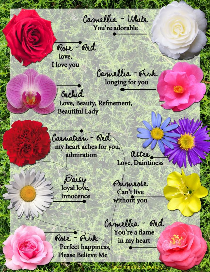 Meanings of Flowers Language, Flower and Pictures