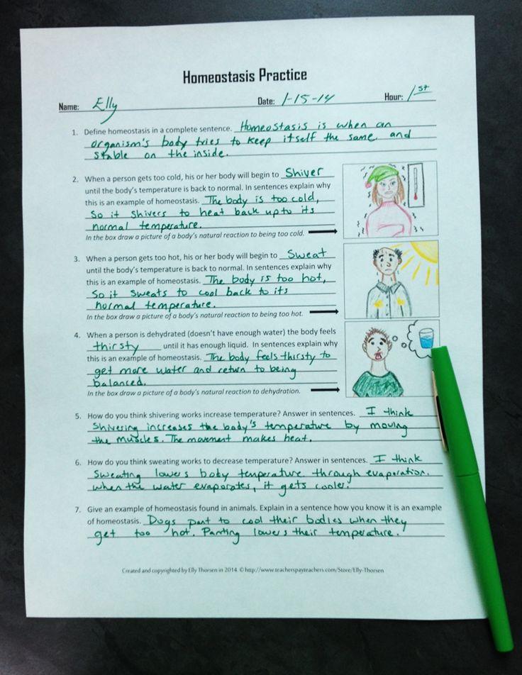 Homeostasis Practice Worksheet Or Homework Assignment
