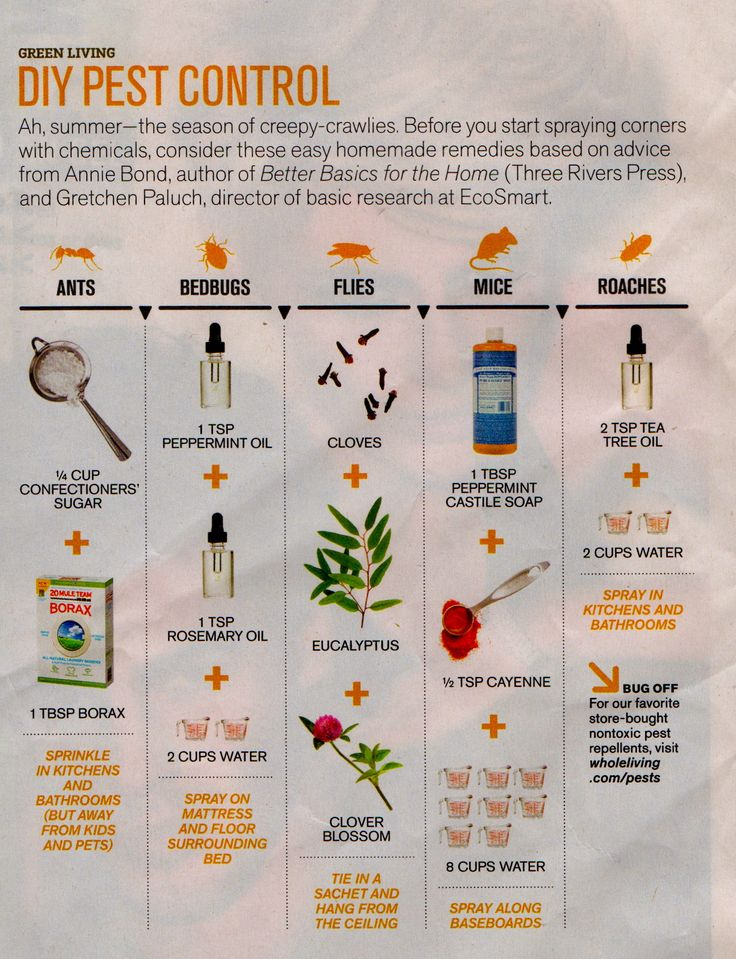 Natural DIY Pest Control Random Pinterest Charts