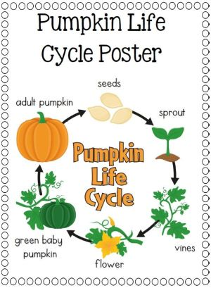 17 Best images about LIFE CYCLES  Science on Pinterest