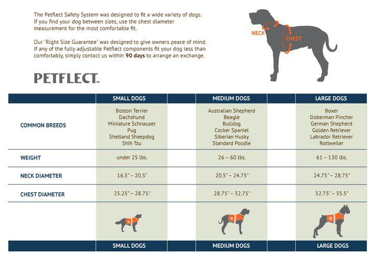 Boxer size chart dog bing images dog stuff pinterest