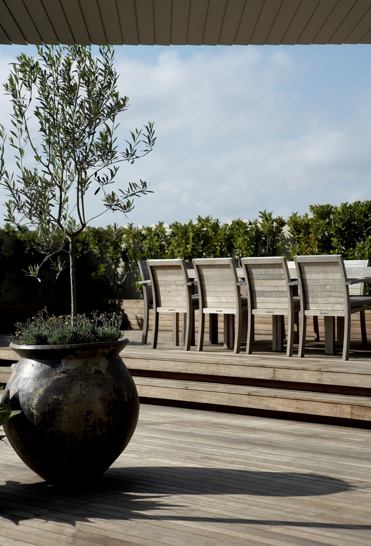 Rooftop garden. Olive Trees in feature pots underplanted