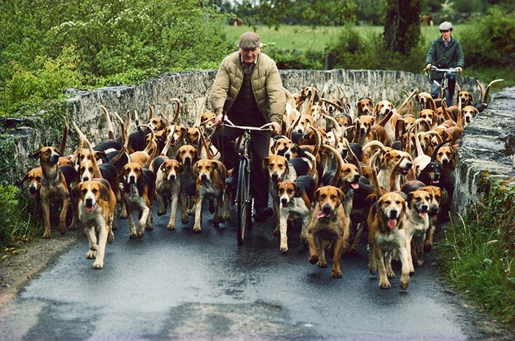 this made me grin! it's a dog herder? that's so many dogs
