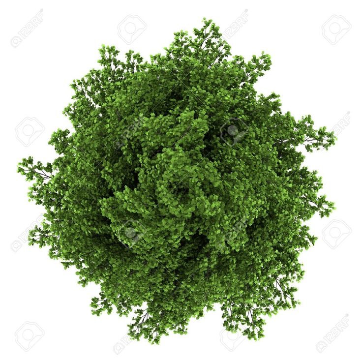 plants top view white background Google Search Green