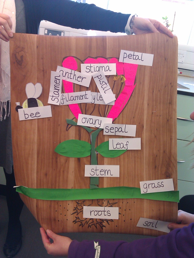 My group's labelled diagram of a flower created during our