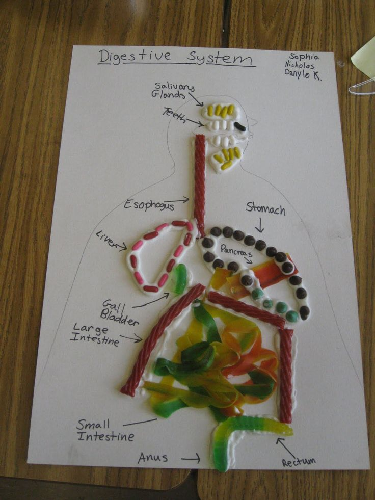 My Science Classroom: Edible Digestive Systems   Science ...