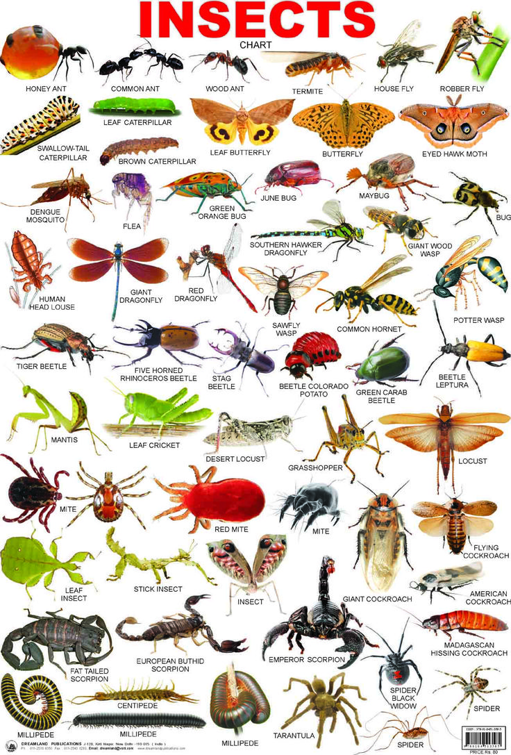 39INSECTS.jpg (1304×1927) crafts Pinterest Charts