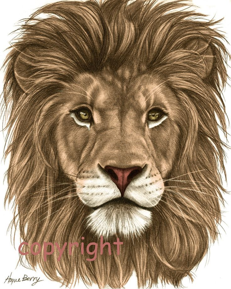 Images For > Colorful Lion Drawing Senior T Shirt Ideas