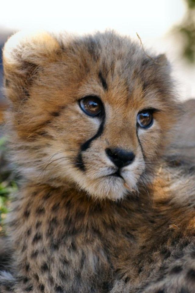 My favorite animal starting as a newborn