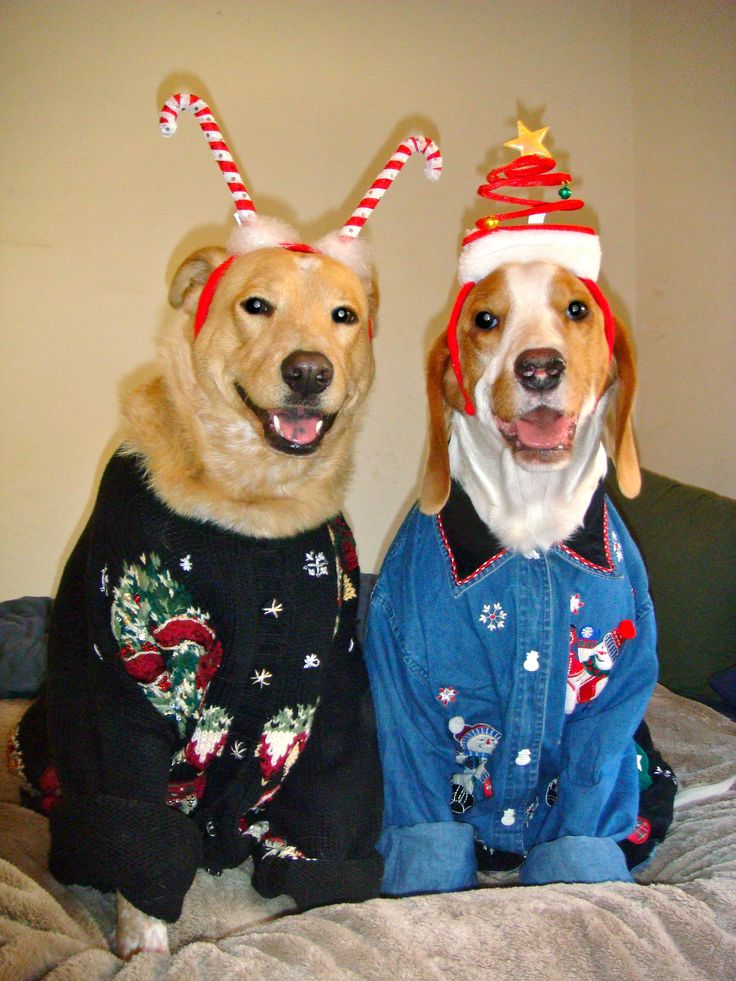 Did somebody say Ugly Christmas Sweater Party?! We're in
