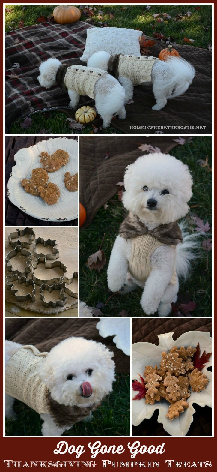 Homemade Pumpkin Thanksgiving Dog Treats