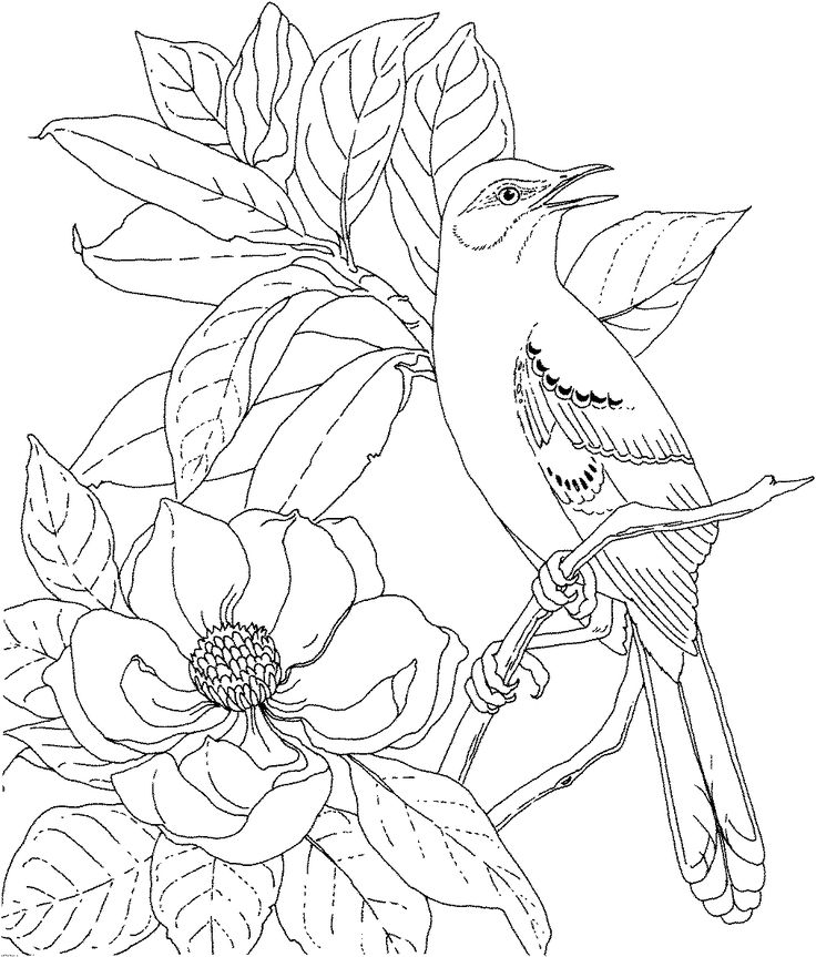 Drawing Pictures Online Free Printable Coloring Page