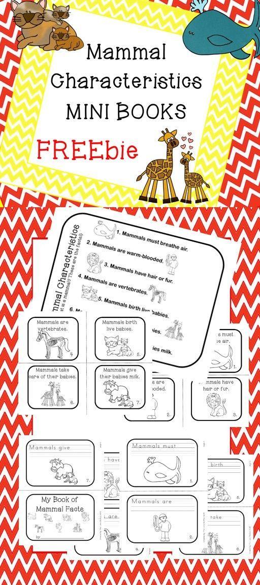 Mammal Characteristics Freebie What Makes A Mammal A