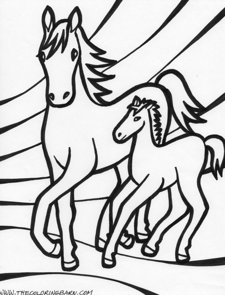 baby horses coloring pages amazing photos pinterest horse