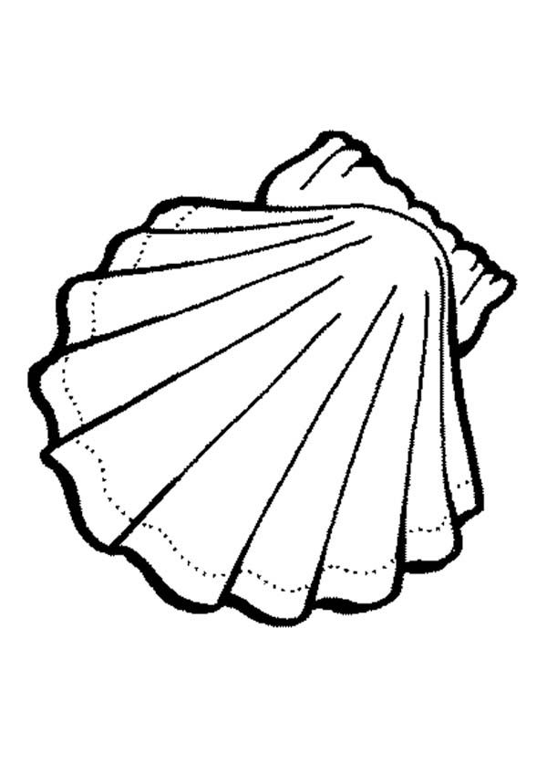 animal coloring pages clam shells and clams on pinterest