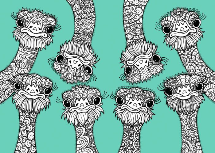 Ostrich Colouring Page Adult ColouringAnimals