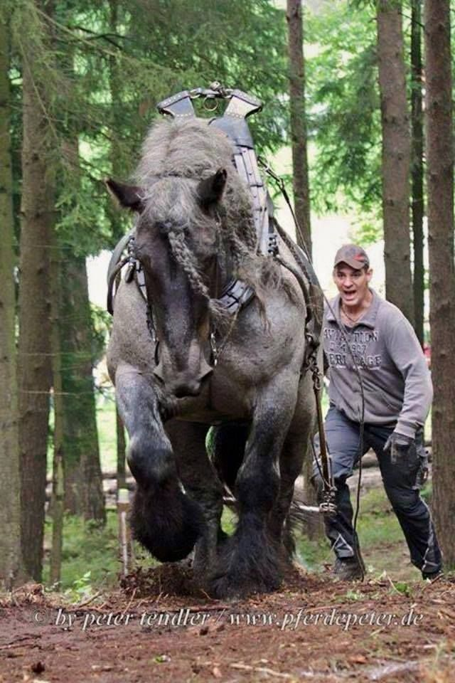 by Peter Tendler (PferdePeter.de Horse Peter, Germany