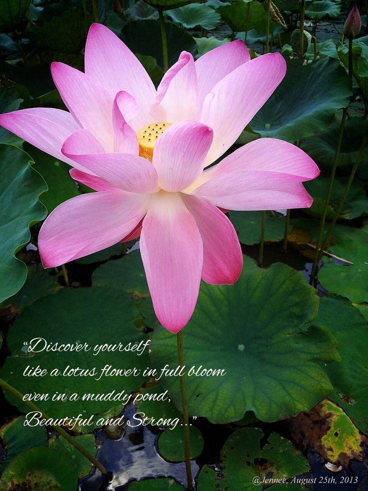 Meaning of Lotus Flower Memories! Pinterest Flower