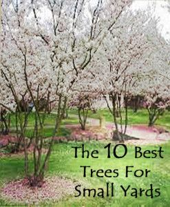 The 10 best trees for small yards