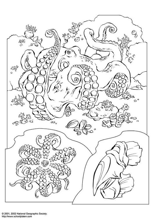Coloring Page Octopus Color Me Adult Coloring Pages