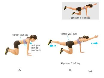 Image result for bird-dog exercise