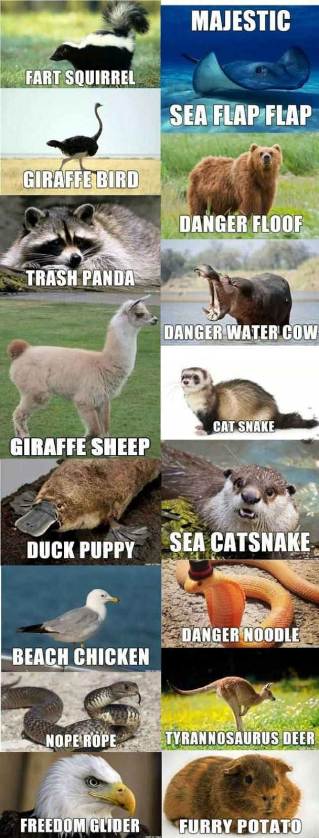 If+I+had+to+name+some+animals. Bust a Gut Pinterest