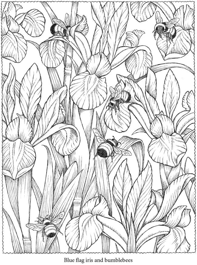 1000 ideas about colour book on pinterest colouring pages