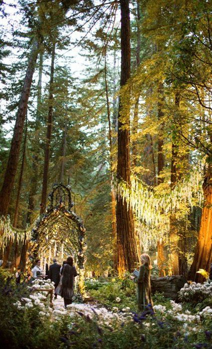 10 Insane Facts About Sean Parkers Enchanted Forest Wedding Sweet Jeebus Im in love with this place!