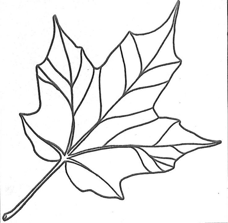 full page leaf template google image result for http www lmsugarbush