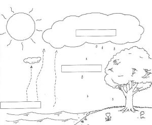 Water Cycle Diagram Worksheet   school   Pinterest