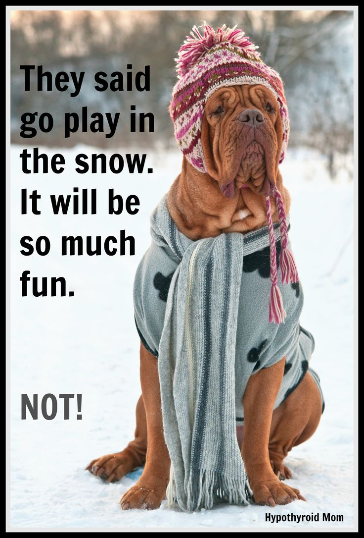 They said go play in the snow. It will be so much fun. NOT