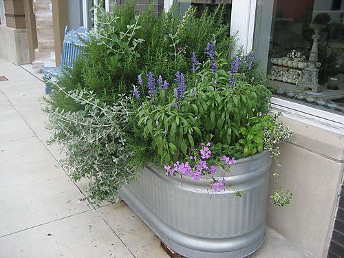 Galvanized Containers Gardening