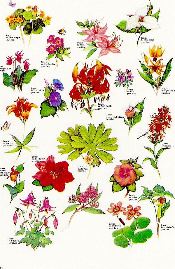 wildflower tattoos Google Search Tattoos Pinterest