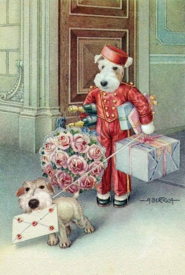 230 Best Images About Vintage Wire Fox Terriers On
